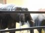 2008 Cleveland Zoo