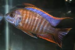 ultraaqua2010 (15)