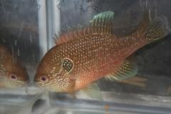 ultraaqua2010 (22)