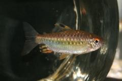 ultraaqua2010 (27)
