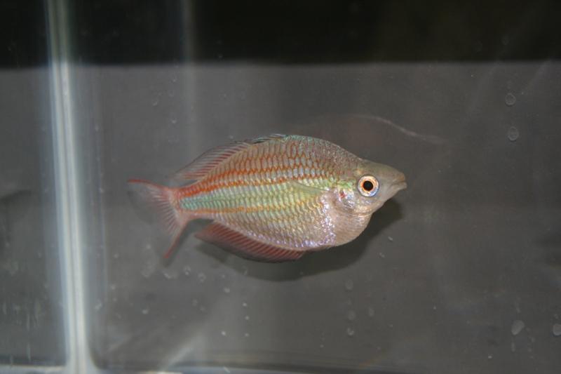 ultraaqua2010 (23)