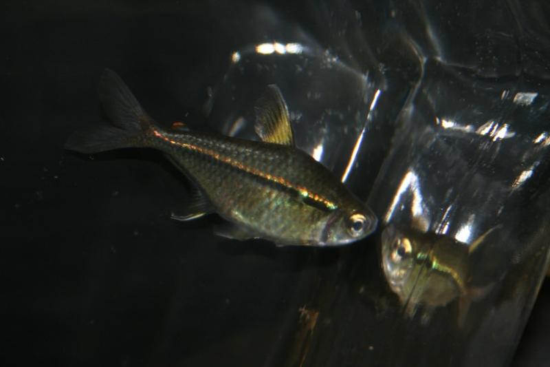 ultraaqua2010 (26)