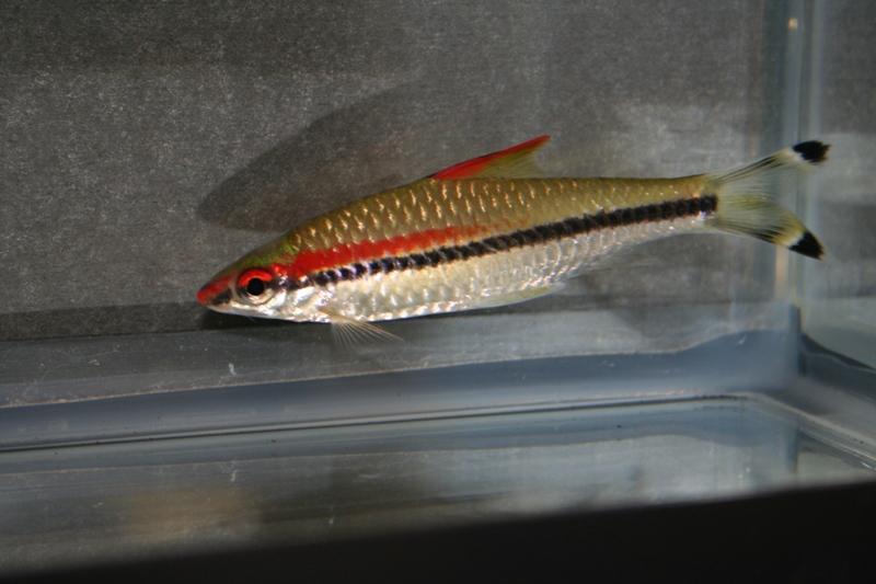 ultraaqua2010 (29)