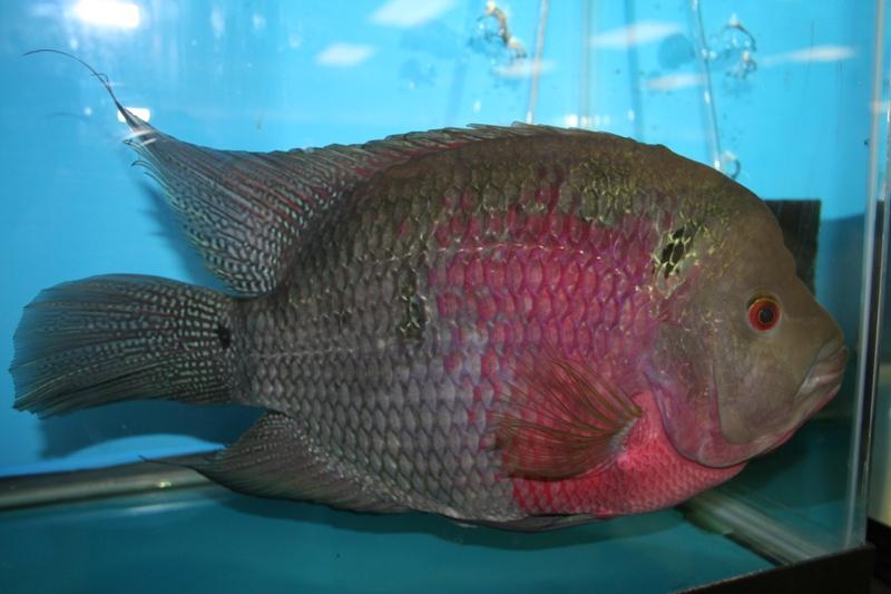 ultraaqua2010 (8)