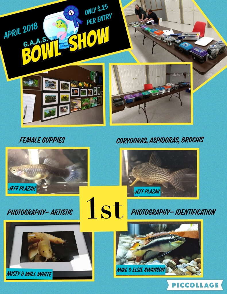 2018 April Meeting Bowl Show