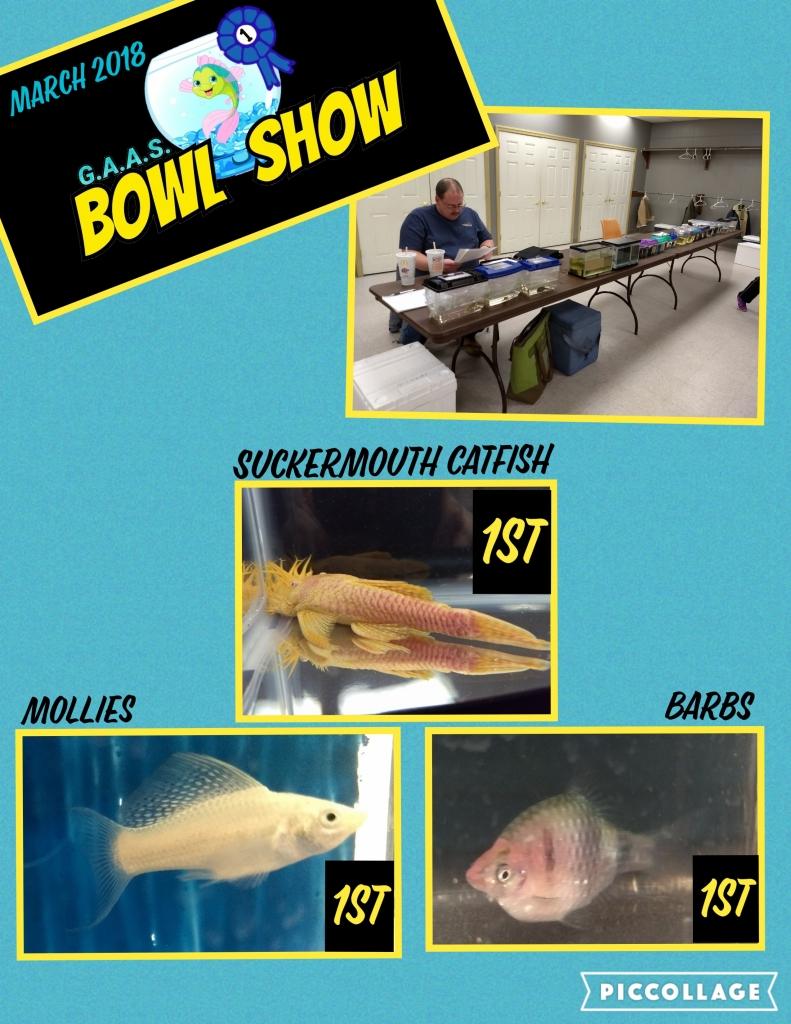 Bowl Show